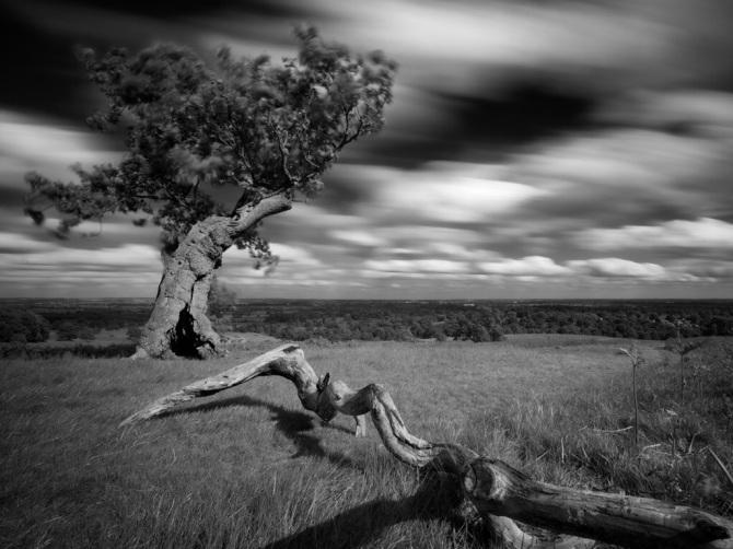 Bradgate Tree