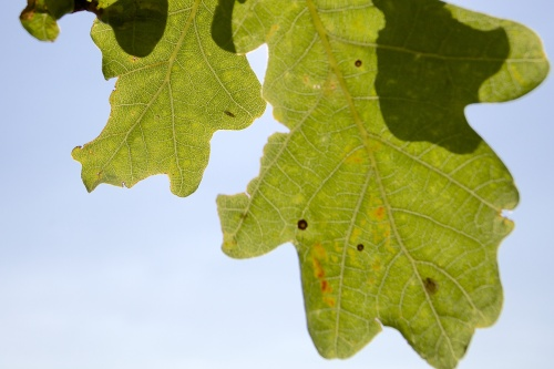 Fig.08 Colour - natural light