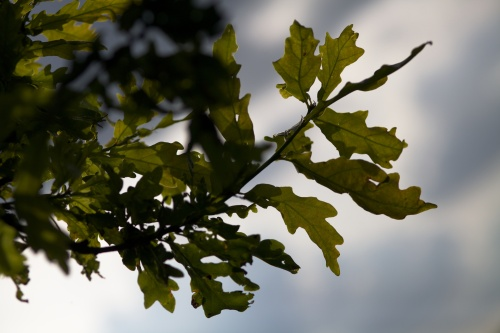 Fig.02 Shape - using natural light